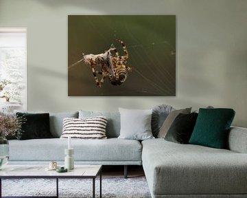 Kruisspin spint prooi in van Carin van der Aa