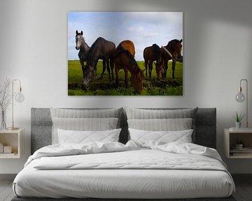 Paarden van Brian Morgan