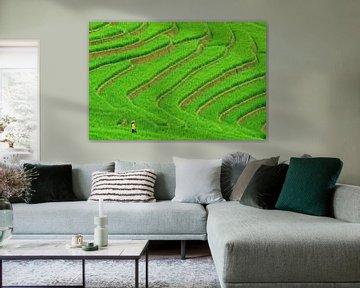 Vietnamese vrouw in rijstveld van Richard van der Woude