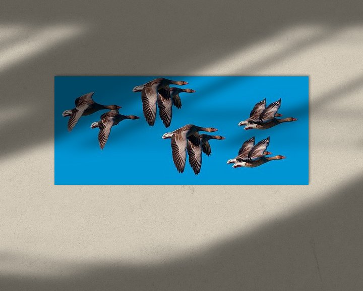 Sfeerimpressie: Een zwerm Ganzen van Brian Morgan