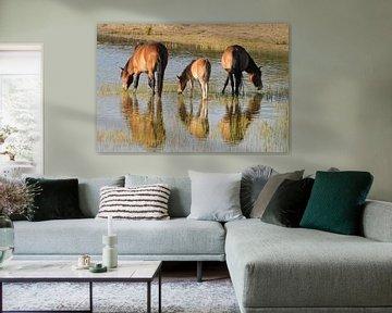 Exmoor ponies    en spiegelbeeld von Peter Zwitser