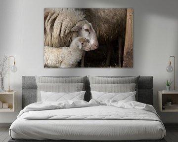 Lammetje met moederschaap sur Cilia Brandts