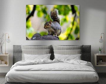 Eichhörnchen von Fokelien Broekstra