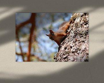 Eekhoorn in boom von Margreet Frowijn
