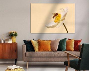 Zweefvlieg op bloem von Margreet Frowijn