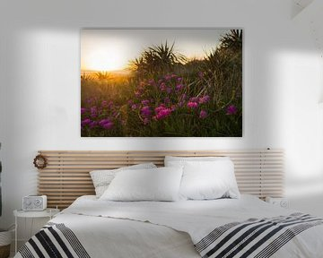 Roze bloemen krijgen een gouden randje tijdens zonsondergang von Marjoleine Roos