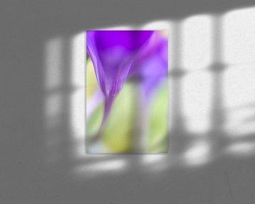 Kleurrijk detail van een krokus von Mark Scheper