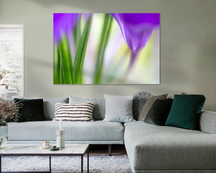 Sfeerimpressie: Kleurrijk detail van een krokus van Mark Scheper