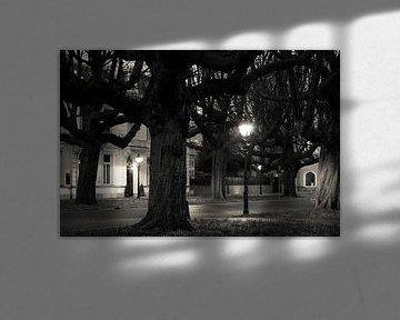 Kastanjebomen Sophialaan Den Haag von Raoul Suermondt