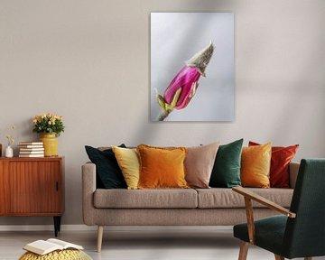 magnolia von Marian van den Boogaard