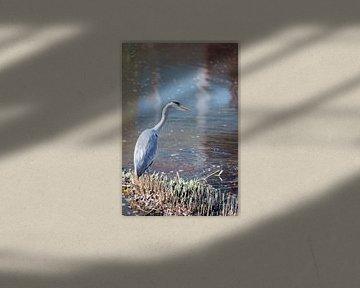 Blauwe reiger op uitkijk von Lendy Fotografie .