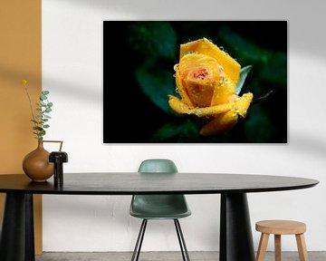 druppels op een gele roos von Yvon van der Wijk