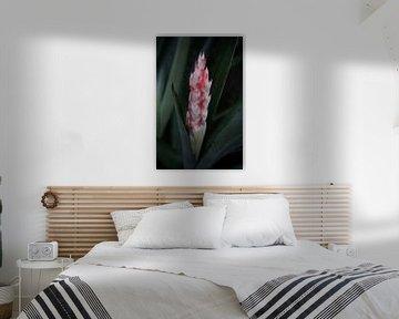 Cactus met bloem von Anne van de Beek