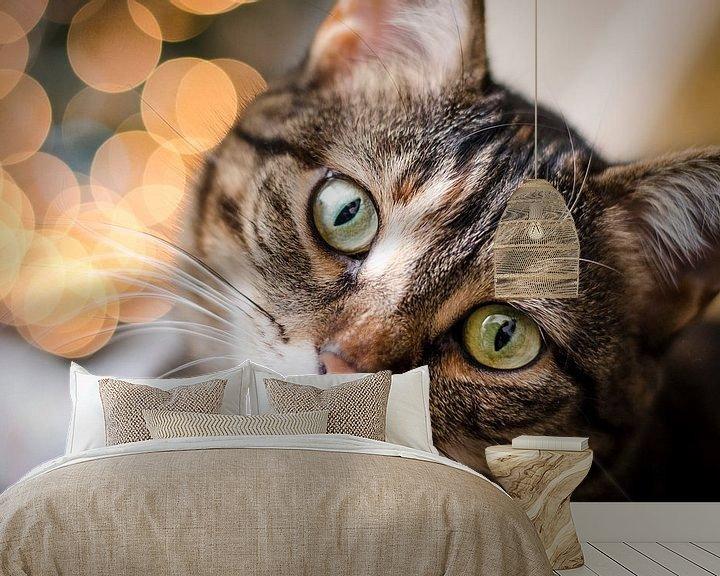 Beispiel fototapete: Christmas cat von Tom Keysers
