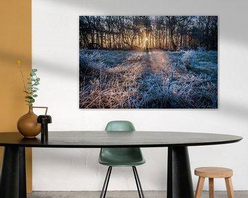 Winterse zonsopkomst in het bos