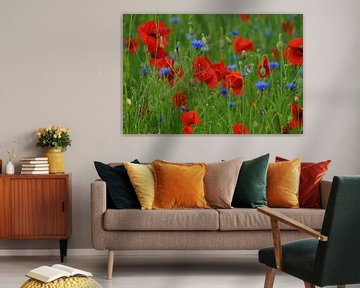 Klaprozen en korenbloemen in een veld  von Elfriede de Jonge Boeree