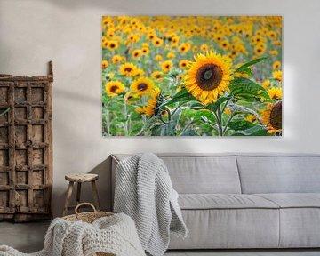 Zonnebloemen von Kees Korbee