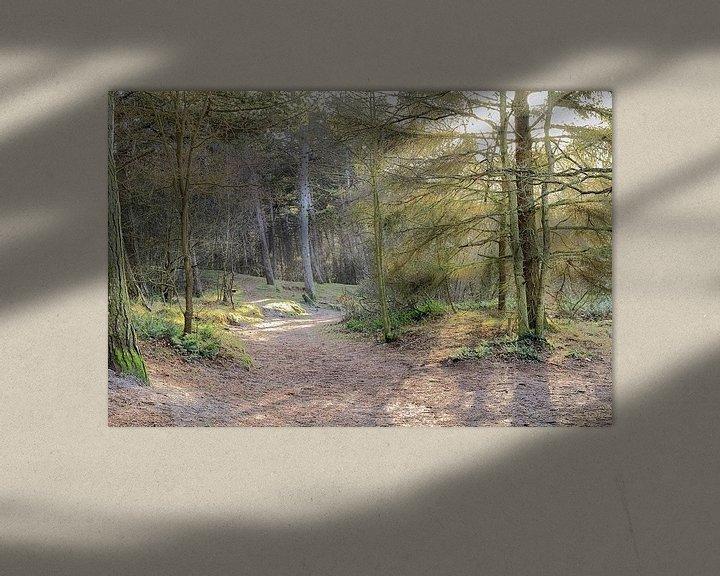 Sfeerimpressie: Donkere duinen - bos in Den Helder van Ronald Smits