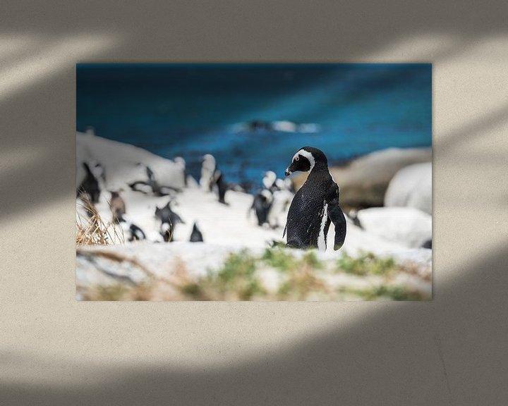 Sfeerimpressie: Pinguin van Trudy van der Werf