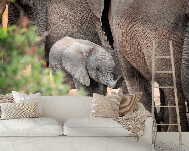Sfeerimpressie behang: Baby olifant van Trudy van der Werf