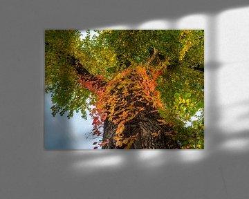 Boom met veelkleurige bladeren op de stam von Ronald Smits