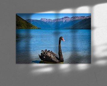 Zwarte zwaan in Lake Rotoroa, Nieuw Zeeland van Rietje Bulthuis