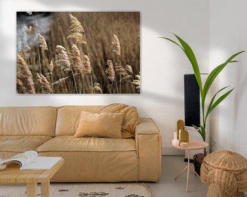 De betovering van prachtig wuifriet von Lendy Fotografie .