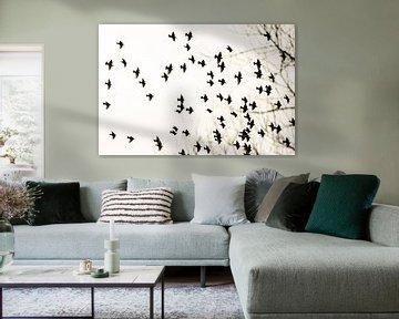 Starling Wolke von Marianne Jonkman