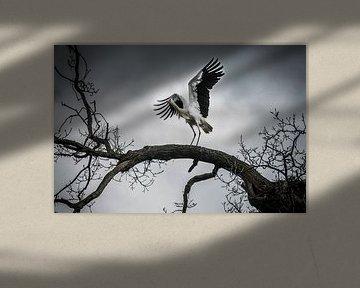 Wings of freedom van AnyTiff (Tiffany Peters)