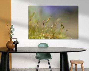 Blüte Moos von Yvonne van Leeuwen