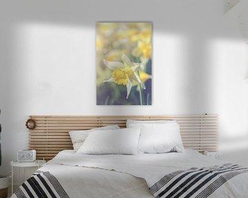 Narcissus (narcis) von Alessia Peviani