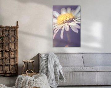 Daisy up close, vertical (Bellis perennis) van Alessia Peviani