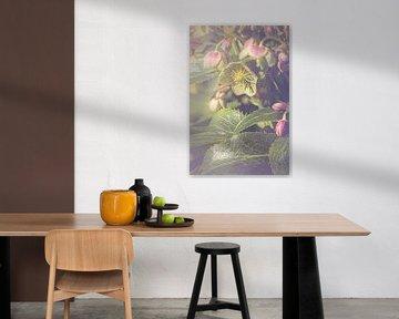 Nieskruid bloem (Helleborus sp.) van Alessia Peviani