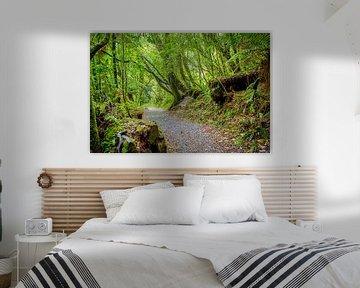 Bospad in Abel Tasman NP, Nieuw Zeeland van Rietje Bulthuis