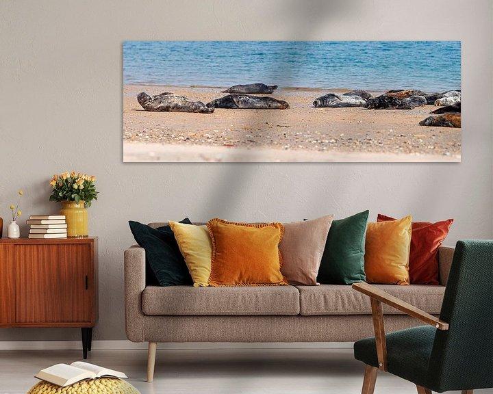 Sfeerimpressie: Panorama Zeehonden van Anton de Zeeuw