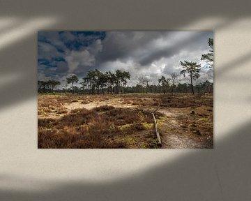 Liereman HDR van Paul Oosterlaak