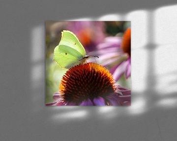 Schmetterling  Zitronenfalter von Violetta Honkisz