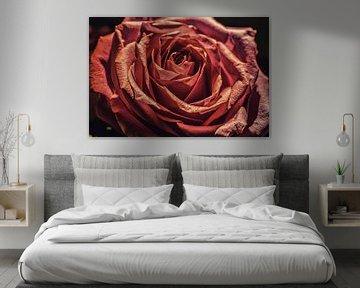 Roos van Paul De Keizer
