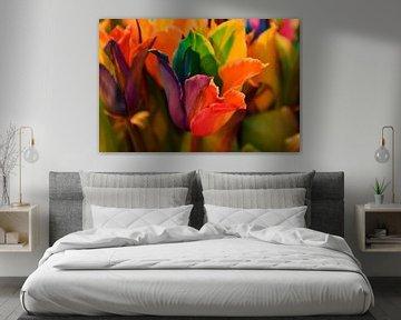 bunte Tulpe Tulipa von tiny brok