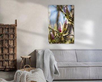 Magnolia von Petra Brouwer