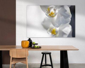 Orchidee macro von Robby Stifter