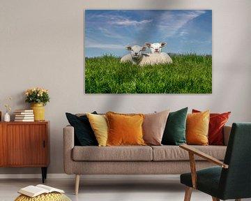 Schapen lammetjes texel von Texel360Fotografie Richard Heerschap