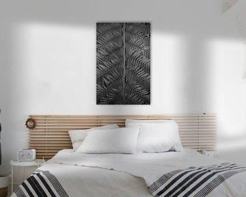 Lijnen van een plant in zwartwit von Anne van de Beek