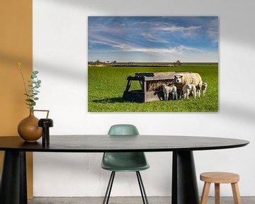 moeder schaap met lammetjes texel  von Texel360Fotografie Richard Heerschap