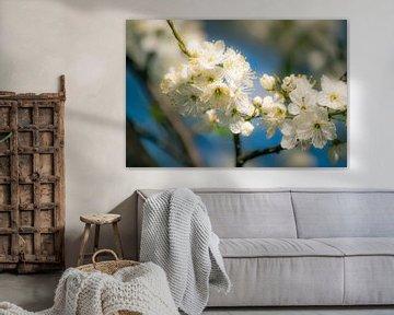 Witte Bloesem tegen blauwe lucht van Marjan Kooistra