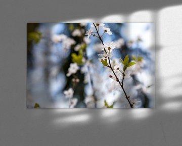 Blütezeit von Mandy Jonen