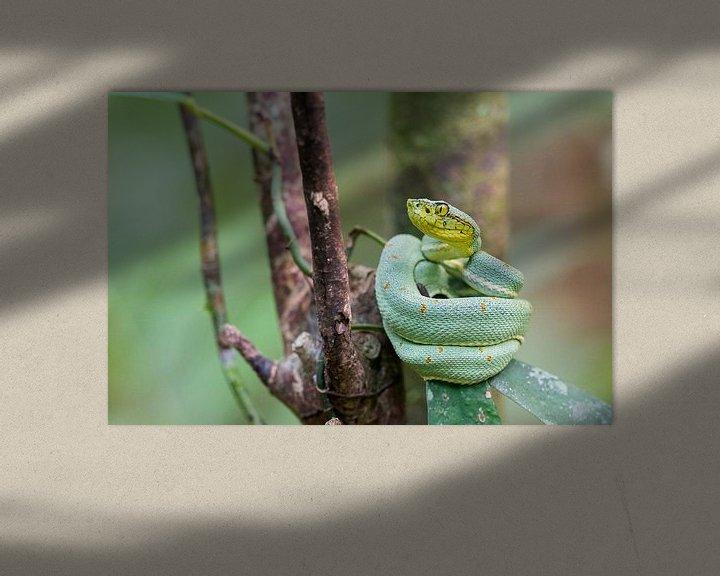 Impression: Un serpent à pointe de lance reposant sur une feuille dans la forêt tropicale brésilienne. sur Thijs van den Burg