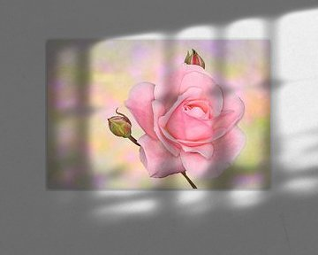 Roze roos von Jeannette Penris