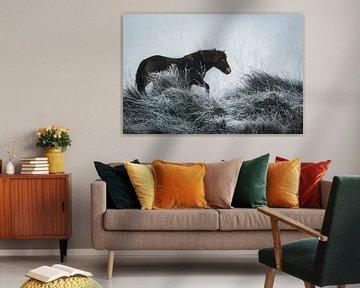 Winter paard von AnyTiff (Tiffany Peters)