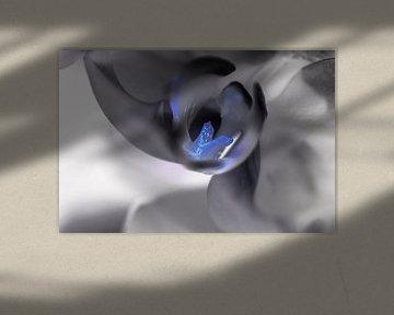 Orchidee von Robby Stifter